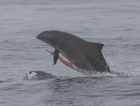 Dolphin G
