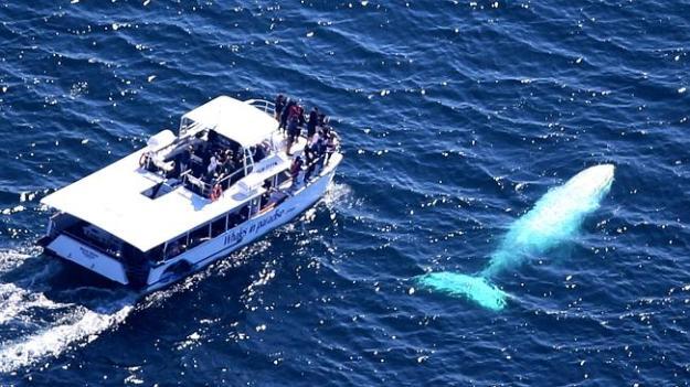 white whale06