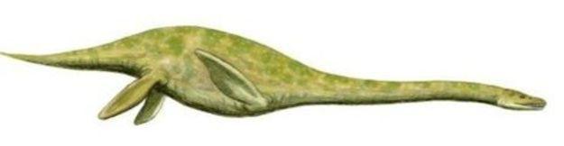 Plesiosaurs 04