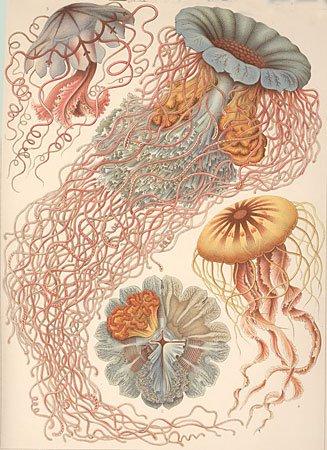 Ernst Haeckel 03