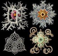 Ernst Haeckel 04