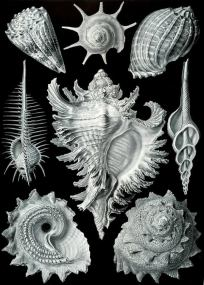 Ernst Haeckel 05