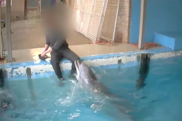 02 Dolphinarium.jpg