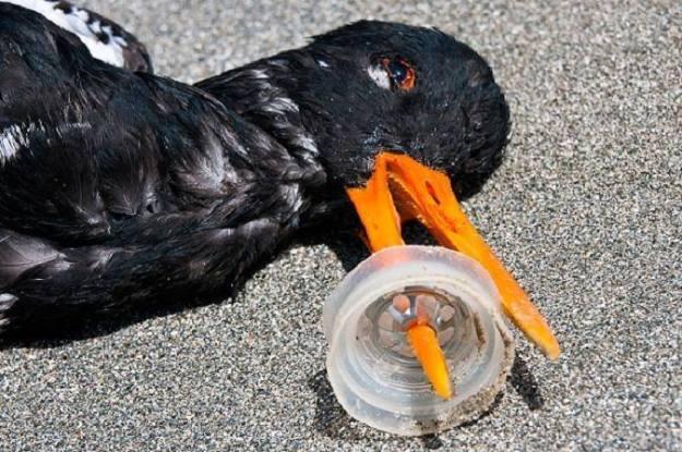 คิดสักนิดก่อนจะทิ้งขยะลงทะเล 01.jpg