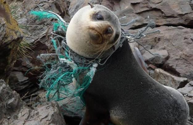 คิดสักนิดก่อนจะทิ้งขยะลงทะเล 03.jpg
