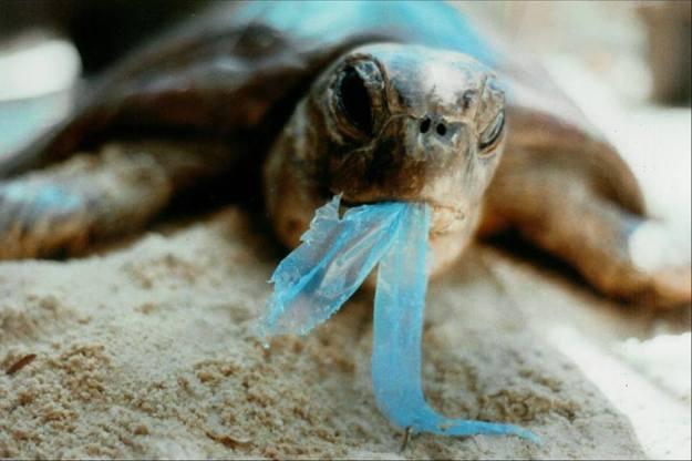 คิดสักนิดก่อนจะทิ้งขยะลงทะเล 04.jpg