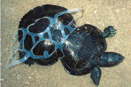 คิดสักนิดก่อนจะทิ้งขยะลงทะเล 05.jpg