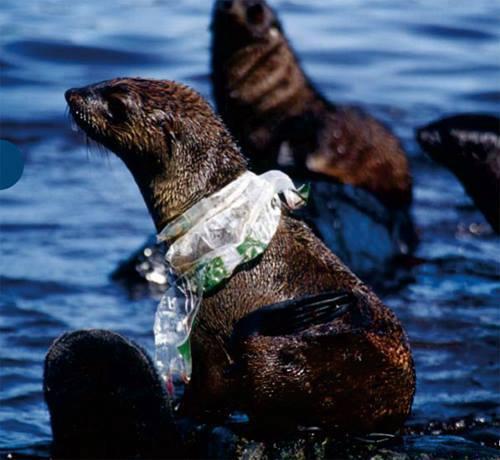 คิดสักนิดก่อนจะทิ้งขยะลงทะเล 06.jpg