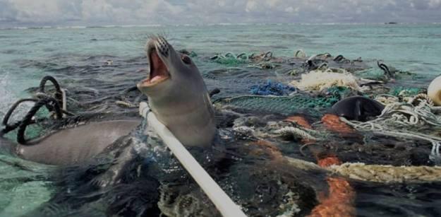 คิดสักนิดก่อนจะทิ้งขยะลงทะเล 07.jpg