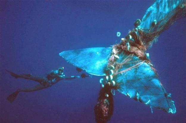 คิดสักนิดก่อนจะทิ้งขยะลงทะเล 08.jpg