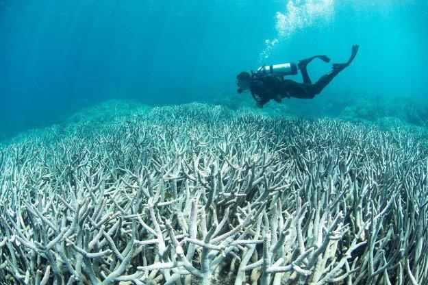 ปะการังฟอกขาว 01.jpg