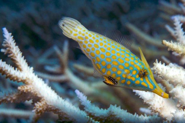 ปะการังฟอกขาว 03.jpg