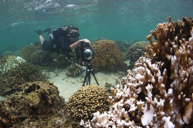 ปะการังฟอกขาว 04.jpg