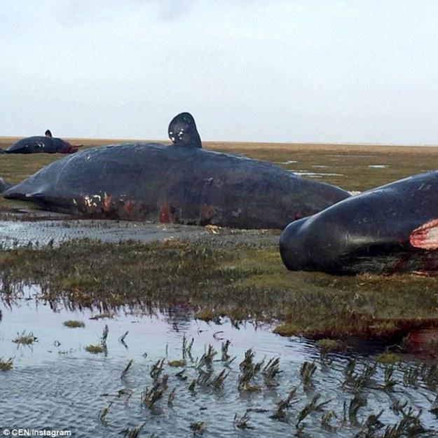 plastic-whale 02.jpg