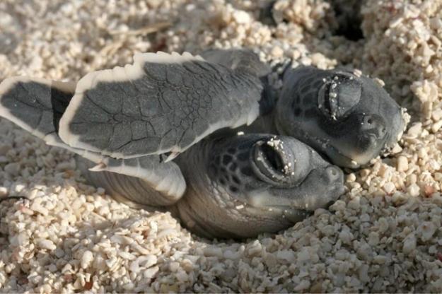 cute-sea-cretures-6.jpg