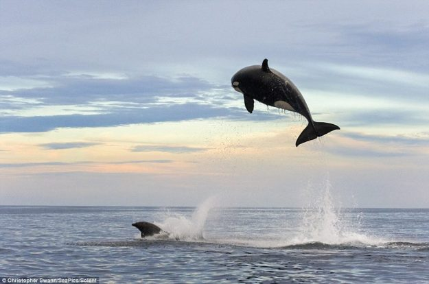 วาฬโหด